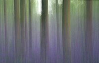 An impressionistic interpretation of a bluebell wood