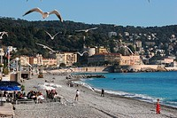 Seagulls flying over the beach, Nice, Côte d'Azur, France
