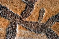 sponge, fossilized sponge, upper Cretaceous, Germany, Solnhofen