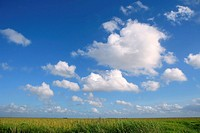 Blue sky in Florida Everglades wetlands green plants horizon, nature