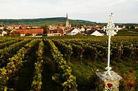 France, Champagne, Chamery village background, and Reims mountain´s vineyards.