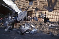 Doves near San Lorenzo Cathedral, Perugia, Umbria, Italy