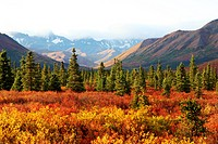 landscape at Denali National Park in autumn, USA, Alaska, Denali Nationalpark