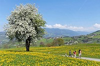 Family hiking in the mountains in spring, Voels am Schlern, South Tyrol, Italy, Europe