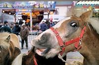 Horse fair, Belgium