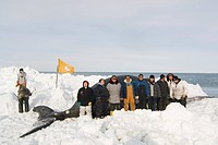 Inupiaq subsistence whale crew and family members pose for a photo with their bowhead whale catch on the pack ice, Chukchi Sea, near Barrow, Alaska