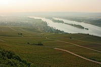 Break of dawn in the vineyards at the Rhine near Rudesheim, Rheingau, UNESCO world cultural heritage, Upper Middle Rhine Valley, Hesse, Germany