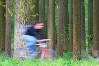 Biker cycles along forest, Belgium