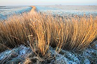 Ditches and reed fringes in meadowlands in winter, Uitkerkse polder, Belgium