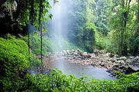 Crystal Shower Falls, Australia, New South Wales, Eastern Central Australian Rainforest World Heritage Area, Dorrigo National Park