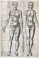 Human anatomy, 16th century artwork. This drawing is from the English translation of Trattato dell´arte de la pittura, scultura, et architettura Oxfor...