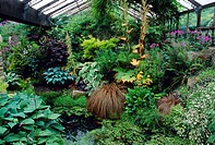Mixed plants in a greenhouse. Assorted species of perennial plants and a fish pond in a greenhouse.