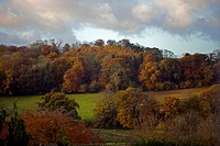 Taw Valley in autumn. Autumnal colours of trees alongside the floodplain of the River Taw. This area is near Bishops Tawton, Devon, England. The trees...