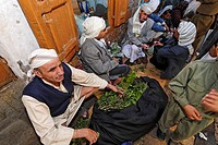 Qat market of Sanaa, Sana´a, Yemen