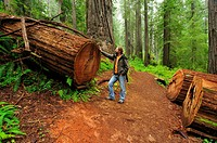 Hiker in front of a felled Redwood tree, Redwood National Park, California, USA