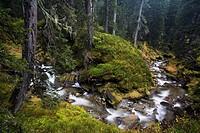 Stream running through the virgin forest in the Rauriser Tal valley, Nationalpark Hohe Tauern National Park, Salzburg, Austria, Europe