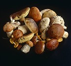 Various edible mushrooms