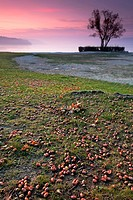 Acorns on the ground at Dingelsdorf on Lake Constance, Germany, Europe