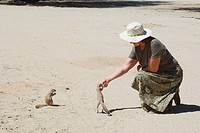 Cape Ground Squirrel being fed / Xerus inauris