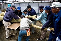 Japanese men working all together in preparations for the new year Japan