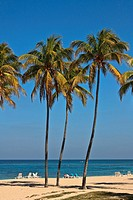 Tall palm trees on a Cuban beach