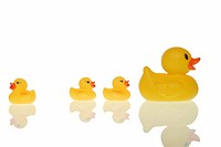 Rubber duck family, one duck heading the opposite direction, symbolic for finding your own way