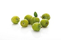 Greengages (Prunus italica) with small leaves