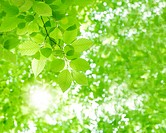 Sun shining through leaves