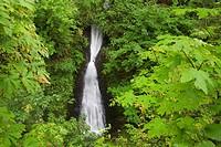 Shepperd´s Dell Falls in the Columbia River Gorge, Greater Portland Region, Oregon, USA