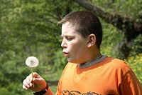 12_year_old boy plays with a dandelion, Taraxacum officinale