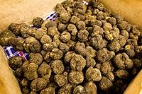 truffles, alba, piedmont, italy