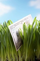 Fifty_dollar bill in grass close_up