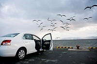 Man inside a car feeding seagulls in a port dock in front of the sea