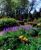 Fernhill Gardens, Co Dublin, Ireland, Herbaceous Border with Bluebells and Oriental Poppies