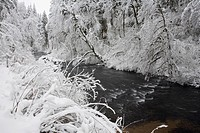 Snowy stream