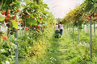People walking in vegetable garden in greenhouse