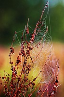 Dew drops in spiderweb - Bavaria/Germany