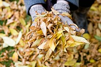 A handful of autumn leaves, close_up