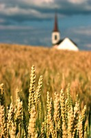 Church In A Golden Wheat Field