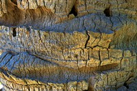 Close_up of the surface of a rock formation