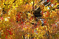 Close_up of leaves on a tree
