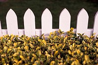 close up of a hedge and picket fence