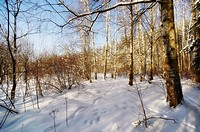 For a Russian forest has always been home  Wood was perceived as a living being, organism, living according to certain laws  Inscribing the laws of th...