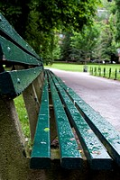 Bench in Boston Public Garden on a rainy summer afternoon