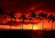 Silhouetted palm trees over the ocean on sunset. Kalama park, Maui, Hawaii, USA