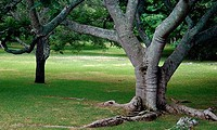 Trees in a park, Bermuda