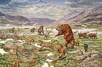 Pleistocene age Ice Age animals, miscellaneous species.