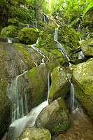 Waterfall, Great Smoky Mtns National Park