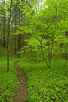 Trail, Great Smoky Mtns National Park