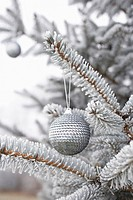 bauble hanging on fir branch in winter